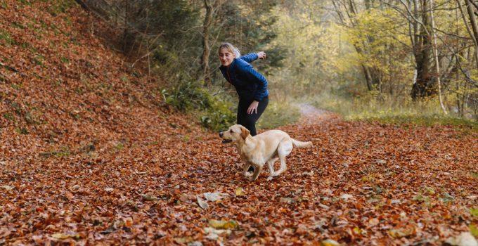 etirement jobs as a pet sitter